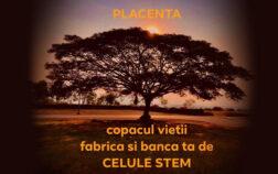 PLACENTA - COPACUL VIETII